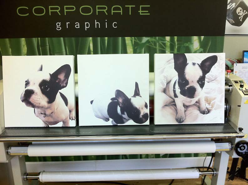 Canvas Prints Doggie Do's Pet Grooming